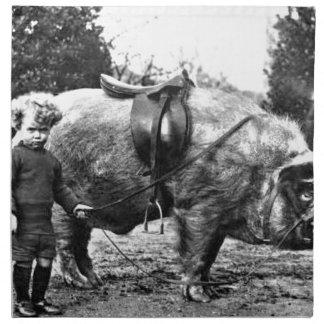 De Ruiter van het varken Servet