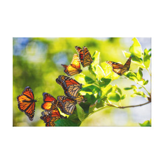De Rustende Plaats van de Vlinder van de monarch Canvas Print