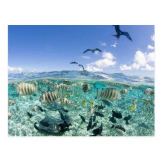 De safarireis die van de lagune Pijlstaartroggen Briefkaart