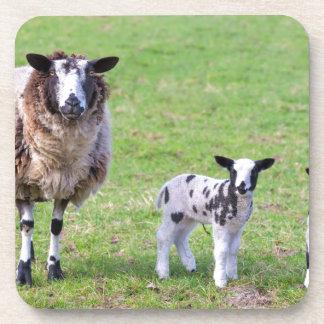 De schapen van de moeder met twee pasgeboren onderzetter