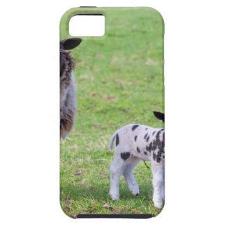 De schapen van de moeder met twee pasgeboren tough iPhone 5 hoesje