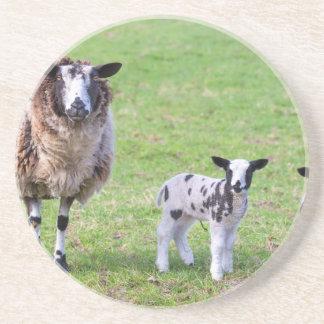 De schapen van de moeder met twee pasgeboren zandsteen onderzetter