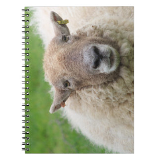 De Schapen van de moeder Notitieboek