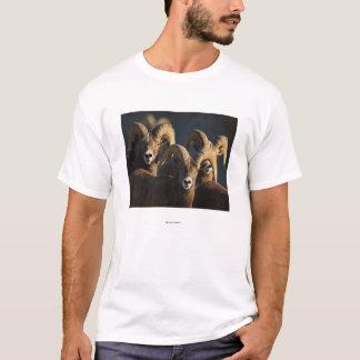 De Schapen van het Bighorn T Shirt