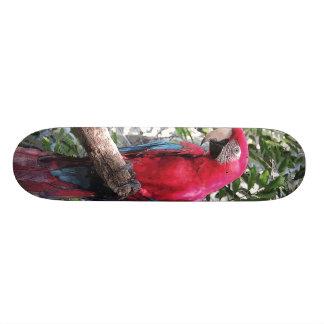 De scharlaken vogel van de Ara - Skateboard