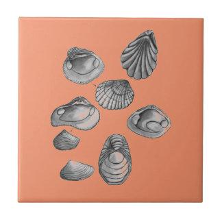De schets van Shell Keramisch Tegeltje
