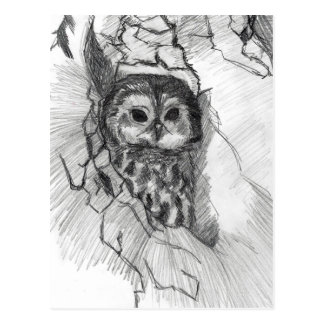 De schetsbriefkaart van de uil door Nicole Janes Briefkaart