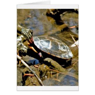 De Schildpad van de schuif Kaart