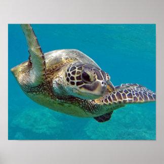 De Schildpad van het Zee van de Eilanden van Hawaï Poster