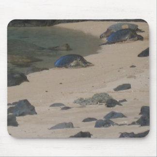 De schildpadden van het zee op de kust van Na Pali Muismat