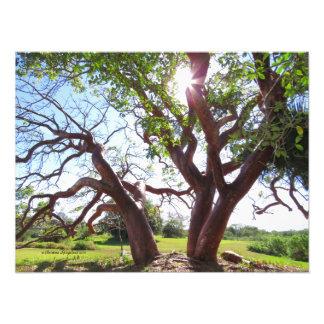 De schitterende Druk van de Zon van de bomen van Foto Afdrukken