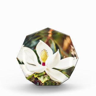 De schitterende Magnolia van de Mississippi Acryl Prijs