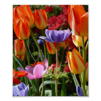 De Schoonheid van de tuin Poster