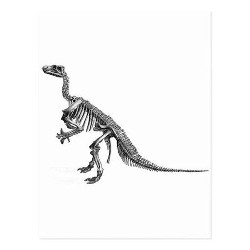 De Selectie van de dinosaurus Wens Kaarten