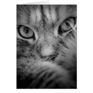 De Siberische Lege Kaart van de Ogen van de Kat