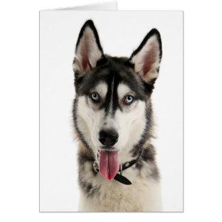 De Siberische Schor Liefde van Hello van de Hond Kaart