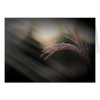 De sier Kaarten van de Nota van het Gras