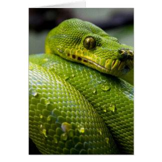 De Slang van de python Wenskaart