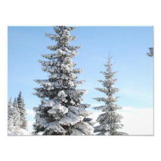 De sneeuw Scène van de Winter met Kerstbomen Fotoafdrukken