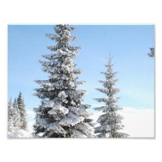 De sneeuw Scène van de Winter met Kerstbomen Footprint