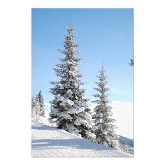 De sneeuw Scène van de Winter met Kerstbomen Fotografische Afdruk