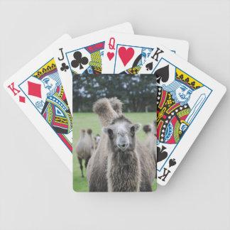 De Speelkaarten van de kameel Pak Kaarten