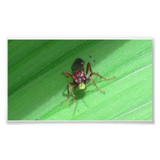 De Spinnen van de Spinachtigen van de Insecten van Foto Print