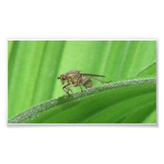 De Spinnen van de Spinachtigen van de Insecten van Fotoafdrukken