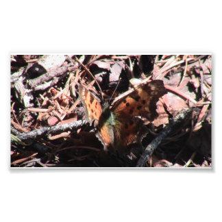 De Spinnen van de Spinachtigen van de Insecten van Foto