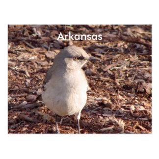 De Spotlijster van Arkansas Briefkaart