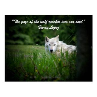 De starende blik van de wolf bereikt in… briefkaart