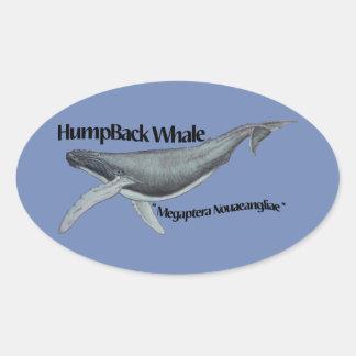 de sticker van de gebocheldewalvis