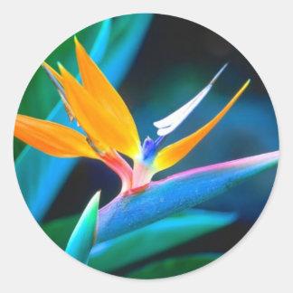 De Sticker van de paradijsvogel