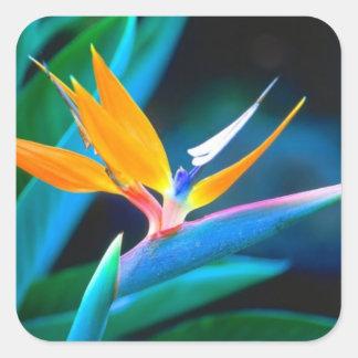 De Sticker van Decrative van de paradijsvogel