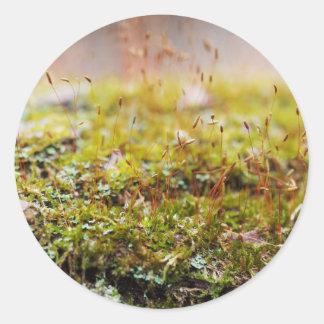 De Sticker van het mos