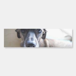 De Stickers van de Bumper van het Puppy van de win Bumpersticker