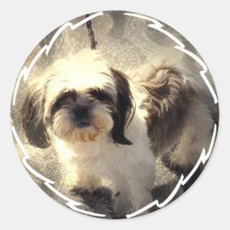 De Stickers van de Hond shih-Tsu