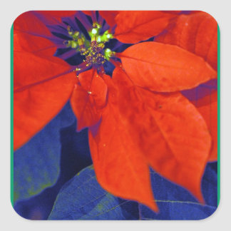 De Stickers van poinsettia