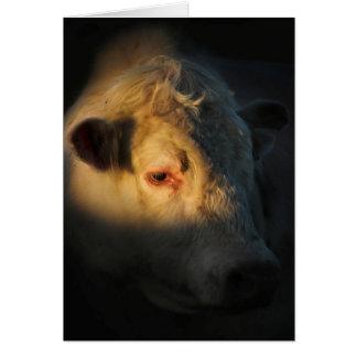 De Stier van Charolais in Zonsondergang Wenskaart