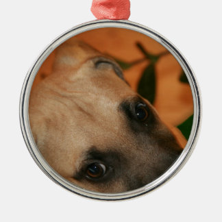 De straathondpuppy van de zwart-mond zilverkleurig rond ornament