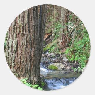 De Stroom van de Californische sequoia van de boom Ronde Sticker