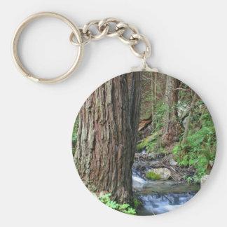 De Stroom van de Californische sequoia van de boom Sleutelhanger
