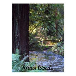 De Stroom van het Bos van Muir Briefkaart