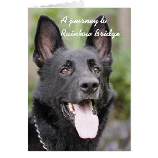 De sympathie van de hond - de Brug van de Kaart