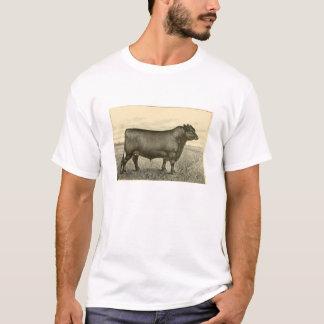 De T-shirt van Aberdeen-Angus