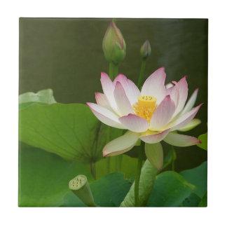 De Tegel van de Bloem van Lotus Tegeltje