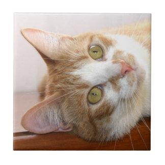 De tegel van het de kattengezicht van de gestreept tegeltje