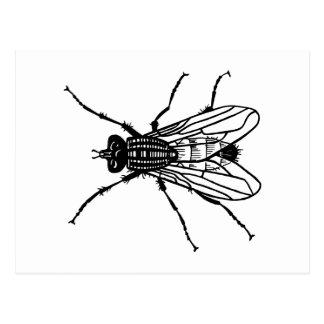 De tekening van de vlieg - insect, ongedierte, briefkaart
