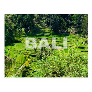 De Terrassen van de Rijst van Bali Briefkaart