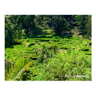 De Terrassen van de rijst van Bali, Indonesië Briefkaart